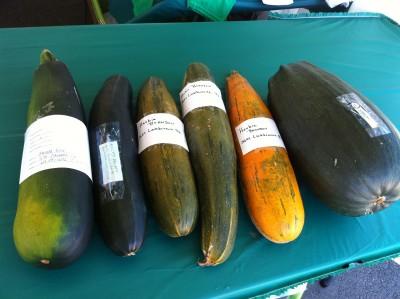 57 - Obetz Zucchini Fest big zucchini